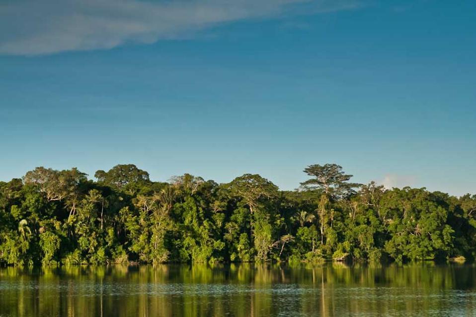 Καταστροφή ρεκόρ του τροπικού δάσους της Αμαζονίας